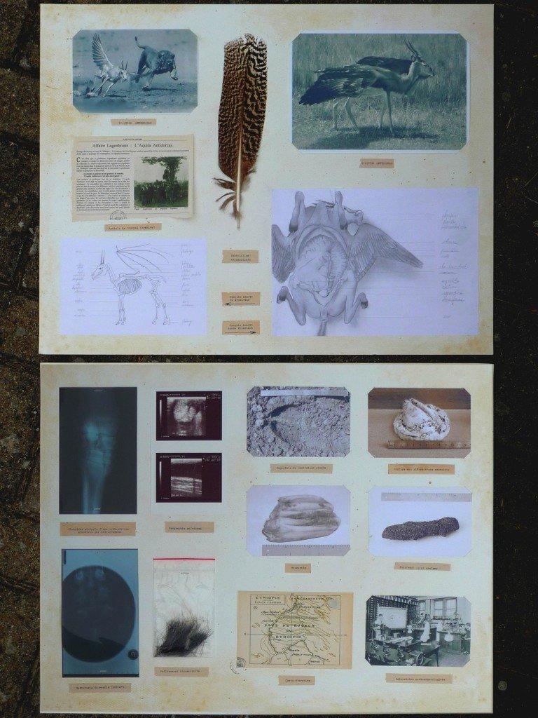 L'Aquila Antidorcas. dans travaux plastiques foncuberta-4-768x1024